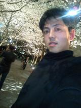 京都の桜はようおまっせ~!